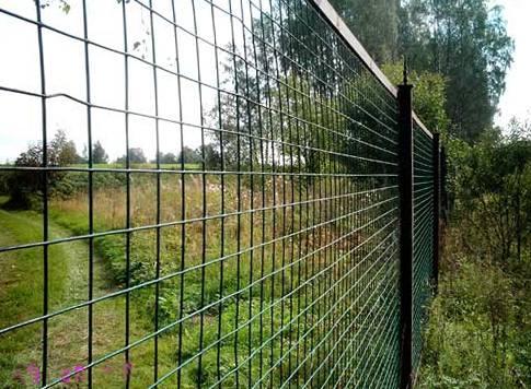 забор из сетки сварной фото