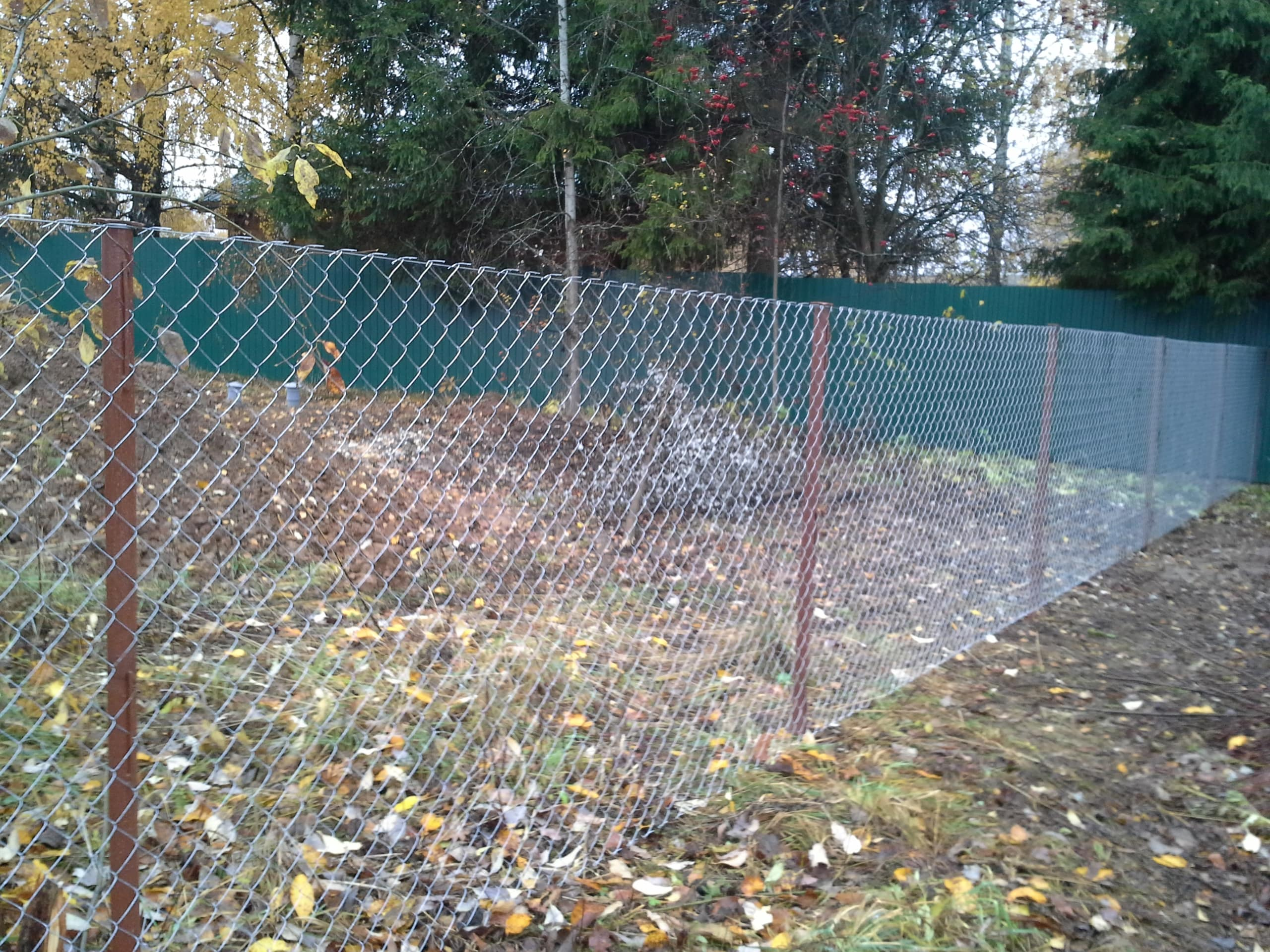 фото забор из сетки рабицы своими яичные белки